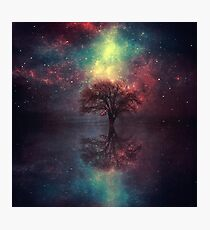 Magic Tree Photographic Print