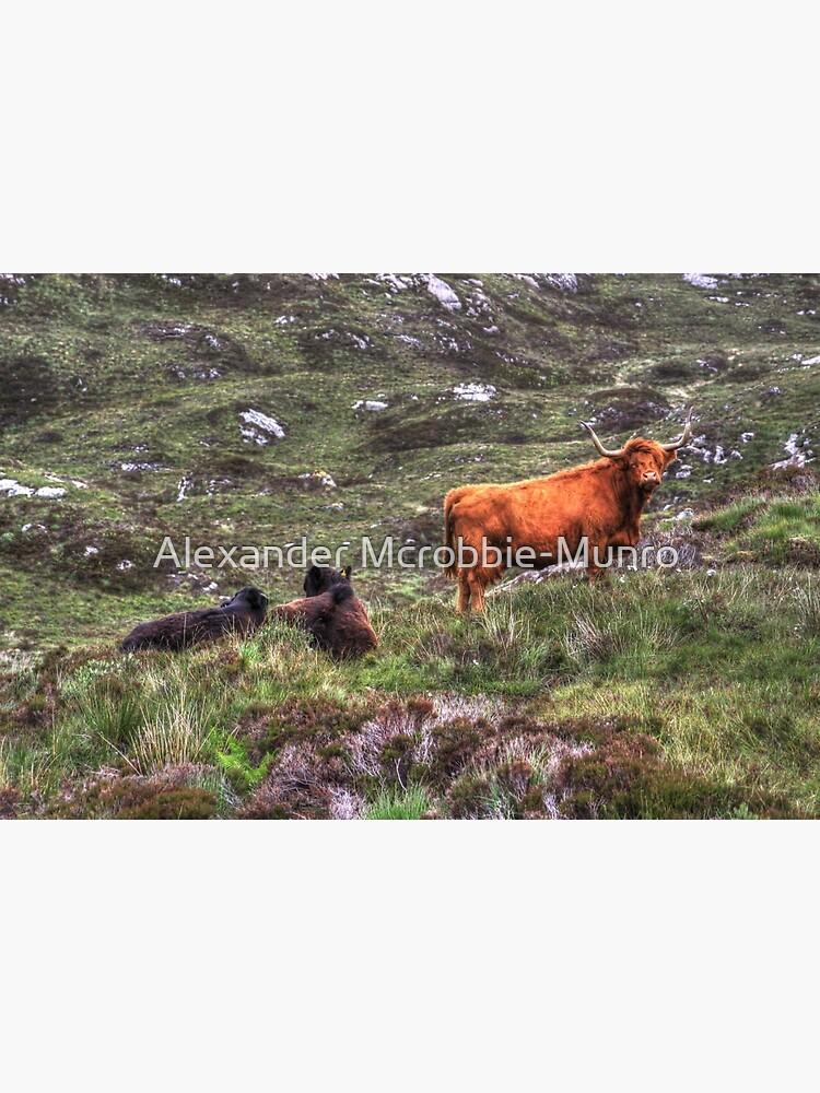 Highland Cattle by Alexanderargyll