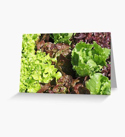 Vegetable Garden: Lettuce Galore Greeting Card