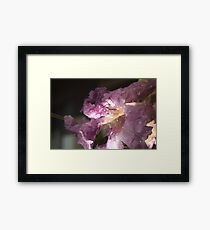 Desert Willow Framed Print