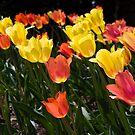 The colored lanterns by Maryna Gumenyuk