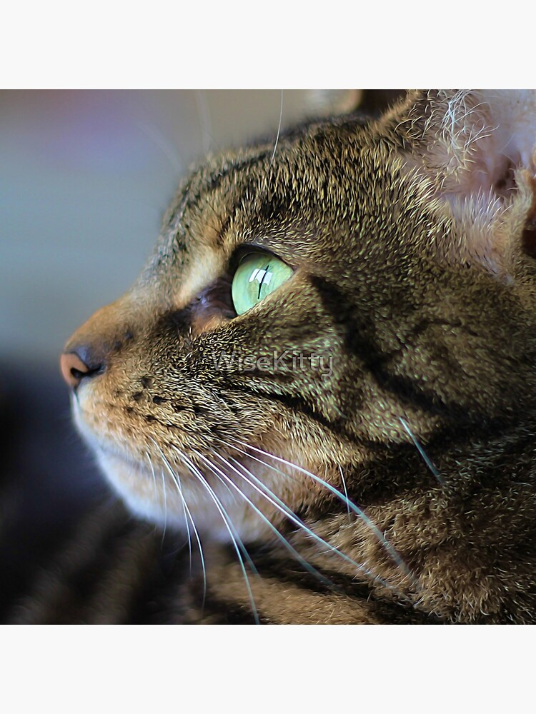 Brown Tabby Cat Profile  by WiseKitty