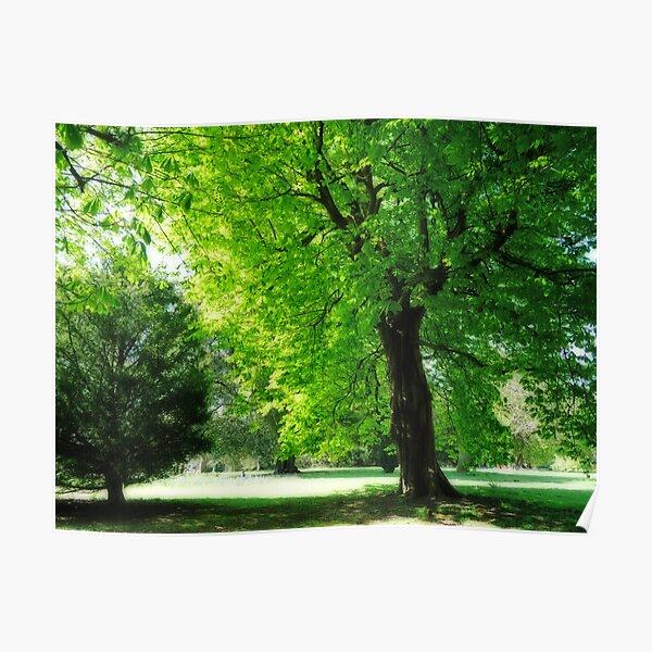 Boy sitting under the tree Poster