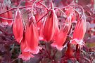 Tiny Red Bells by DPalmer