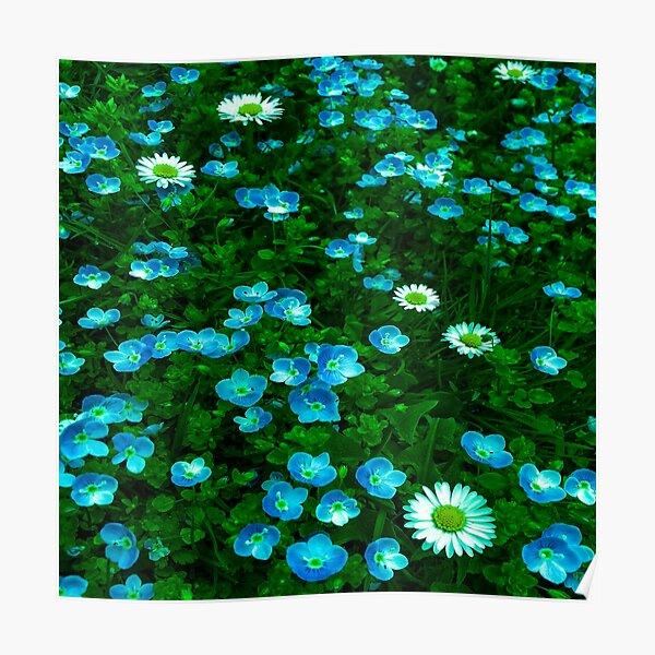 Daisies and Cat's Eyes Meadow Poster