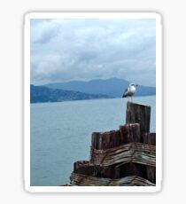 See-gull Sticker