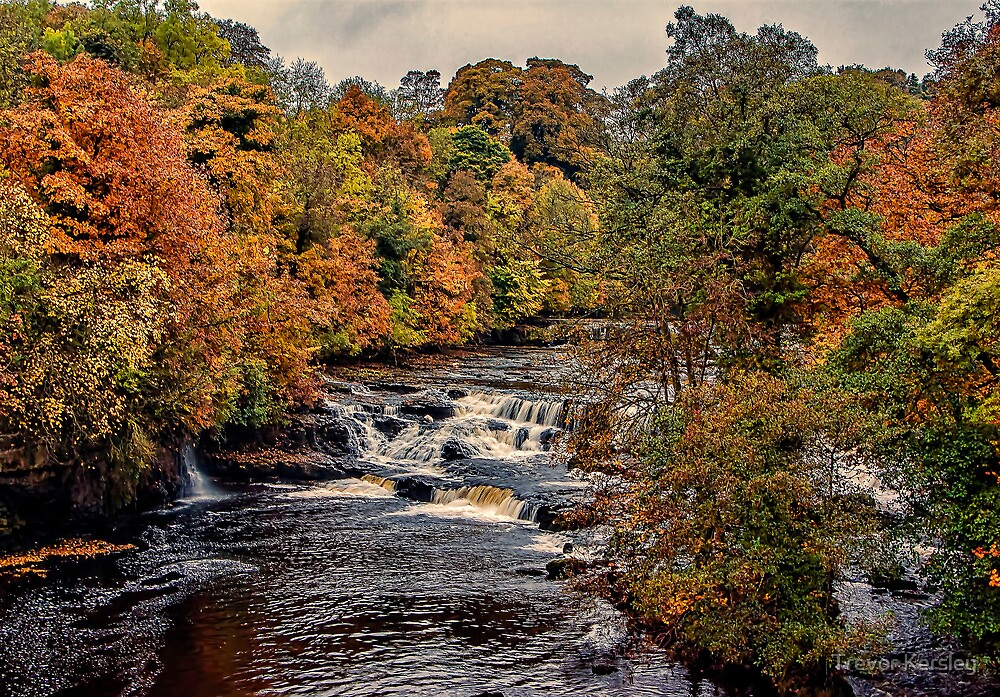 Aysgarth Falls Yorks Dales by Trevor Kersley