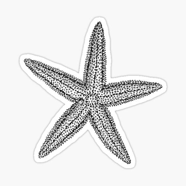 Starfish Sticker