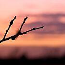Twig at dusk by Kol Tregaskes