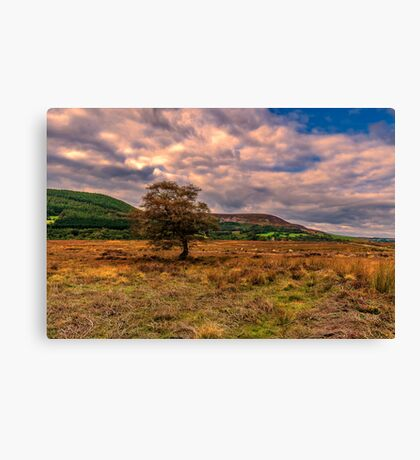 North Yorks Moors Canvas Print