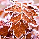 Winter leaves by Kol Tregaskes