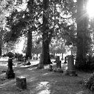 Fair Oaks Cemetery Black & White by Jess Meacham