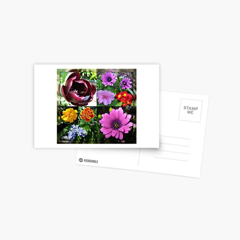 So lange, Frühling! Hallo, Sommer! Sonnenschein-Blumen-Collagen Postkarte