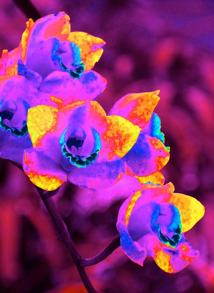 Fantasy Orchids by Margaret Saheed