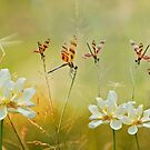 Summer Symphony by Bonnie T.  Barry