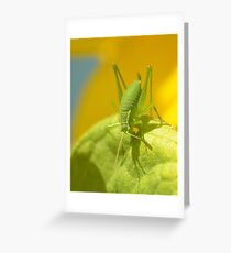 Speckled Grass Hopper  Greeting Card