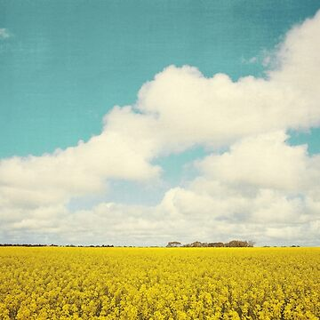Fields of Gold by melbournedesign