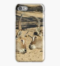 Waterbuck - African Wildlife Background - Fighting Eyes iPhone Case/Skin
