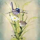 Little Fairy Wrens by Trudi's Images