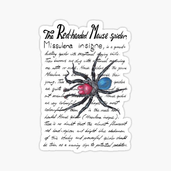 Red-headed Mouse spider Sticker