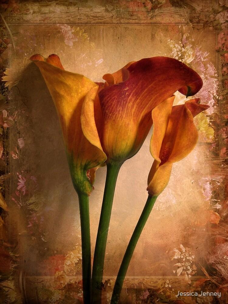 Vintage Calla by Jessica Jenney