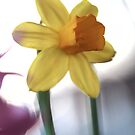 Macro vibrating background yellow flower photo by Jason Franklin