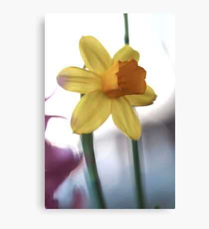 Macro vibrating background yellow flower photo Canvas Print
