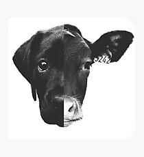 Animal Equality - (Black & White) Photographic Print