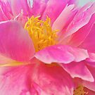 Delicate Dance - A Peony by Cee Neuner