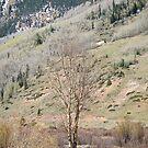 Tree in Spring by Robert Meyers-Lussier