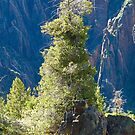 Black Canyon Tree by Robert Meyers-Lussier