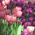 Tulips pinks and purple by Jackie Popp