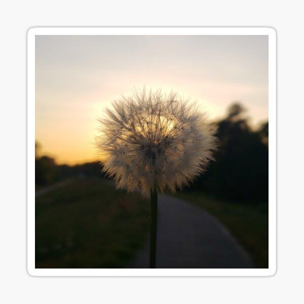 Dandelion Sunset  Sticker