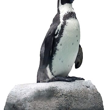Penguin on a Rock by KarenRohenYoder