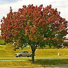 The Autumn Tree by Darlene Bayne