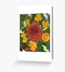 quadratic bloom Greeting Card