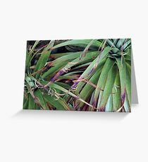 Pandanus Greeting Card