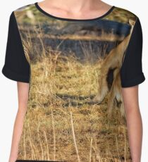 Sunrise at the Pinnacle in Canberra/ACT/Australia Women's Chiffon Top