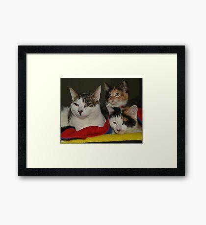 Three meows in a row Framed Print