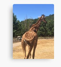 Tail Swinging Giraffe  Canvas Print