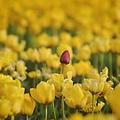 Dare To Be Different by tmtphotography