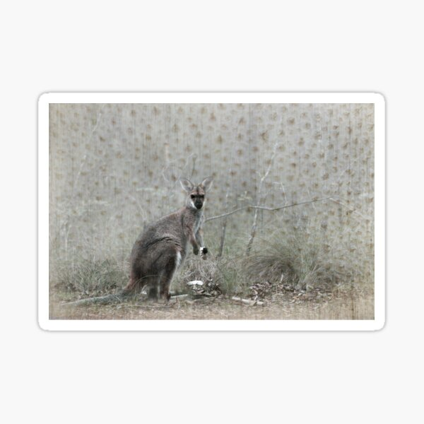 Wallaby Tea Time Sticker