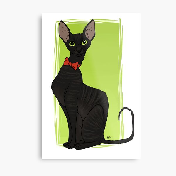 Cornish Rex Metal Print