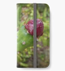 Flowering cactus - cactaceae opuntia iPhone Wallet/Case/Skin
