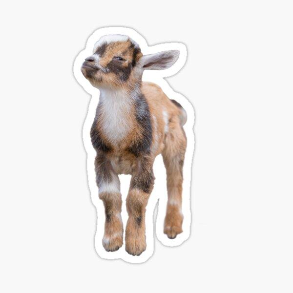 Judgey Goat is Judging You. Sticker