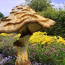 English Giant Toadstool by Stephen Frost