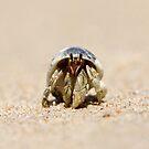 Hermit crab on sandy beach by Emma M Birdsey