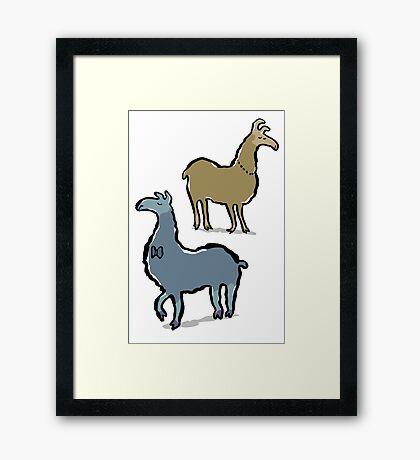 llamas with an attitude Framed Print