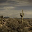 The Lone Cactus by Suzi Harbison