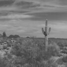 The Lone Cactus Light Matte by Suzi Harbison